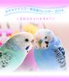 セキセイインコ鳥写真カレンダー 2014 ~愛おぼえていますか?
