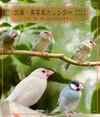 文鳥・鳥写真カレンダー 2014 ~白 並 桜 そしてヒナ文鳥
