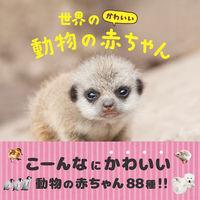 世界のかわいい動物の赤ちゃん 大渕希郷(著/文) - パイ インターナショナル